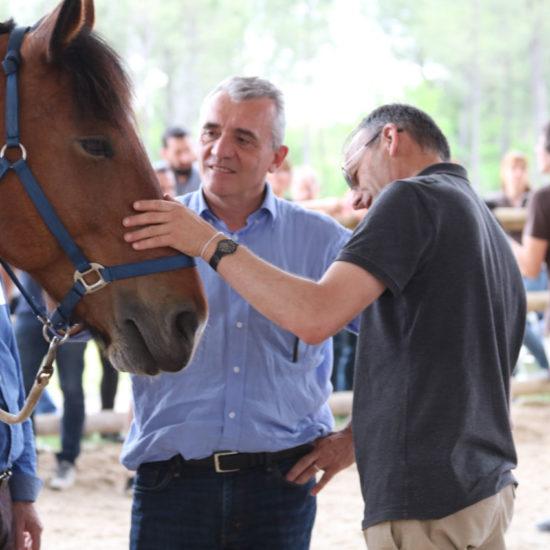 Equicoaching Caresse de cheval
